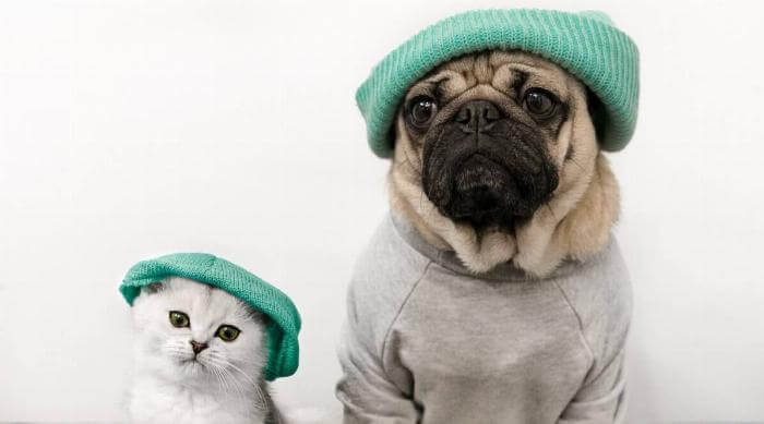 Cat and Dog in Matching Outfits