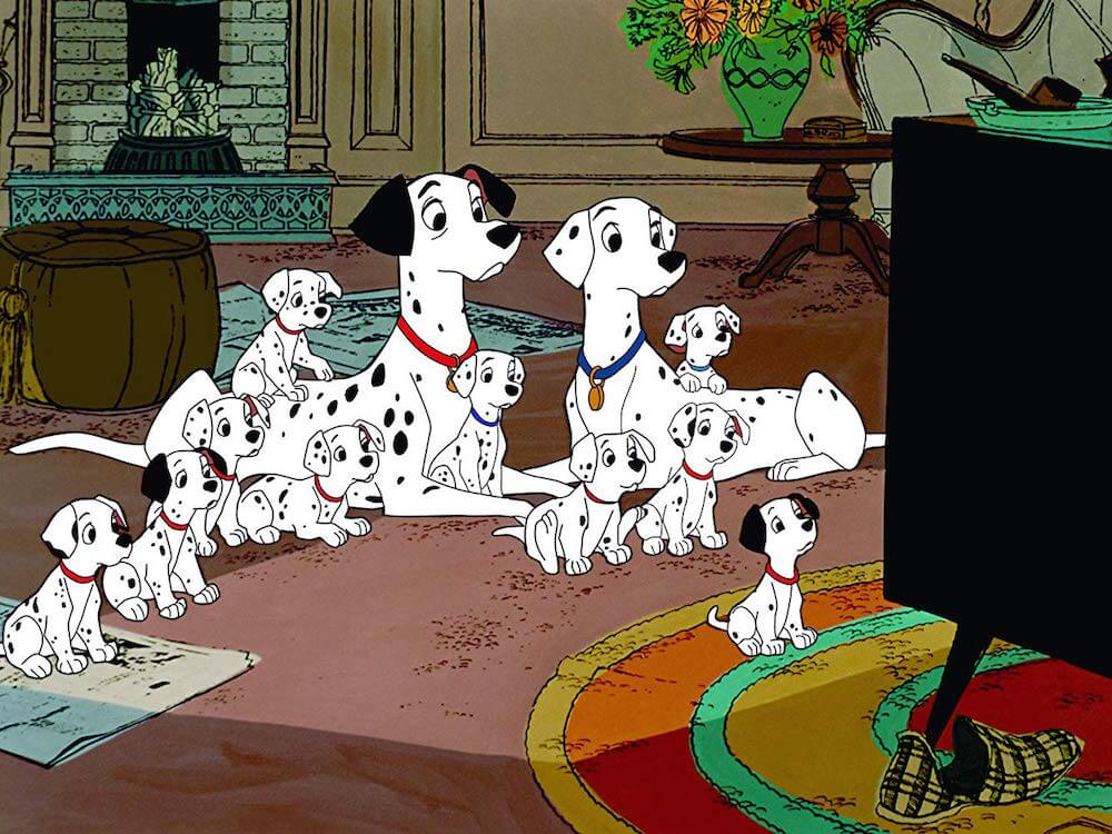 dalmatians quotes to use as instagram captions