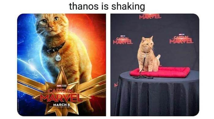 Instagram: Captain Marvel - Goose the cat. Thanos is shaking