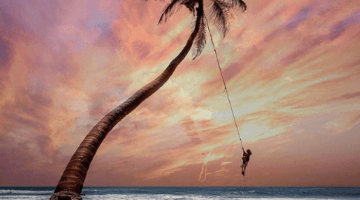 person swinging from palm tree over ocean water