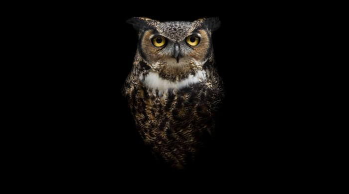 Shutterstock: Owl sitting in dark room