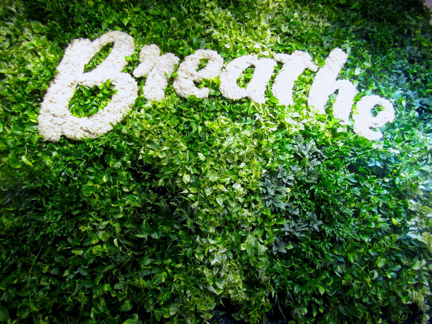 we-rise-breathe-plant-wall