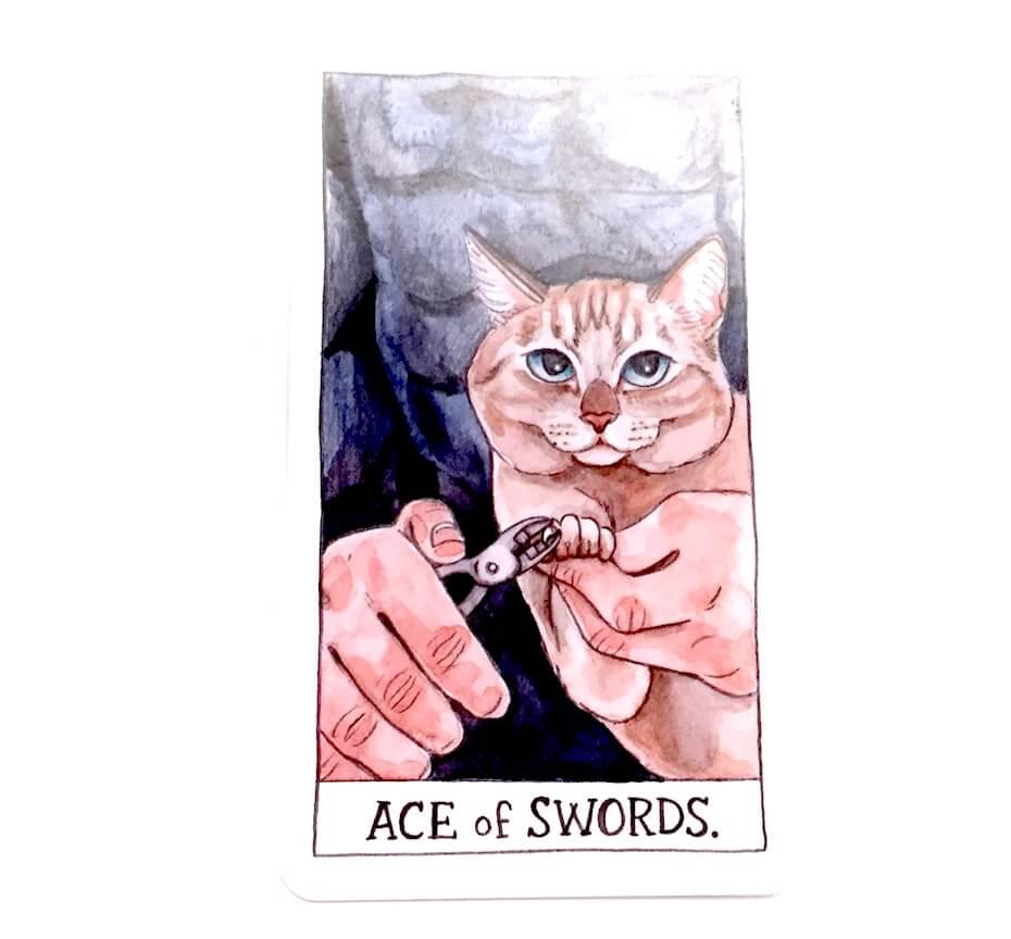 Cat tarot: Ace of swords card
