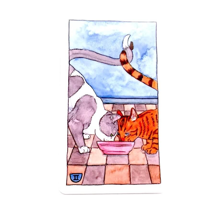 Cat tarot: Two of cups card