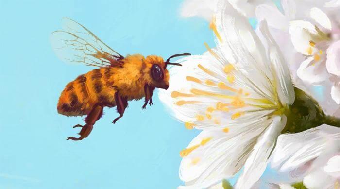 Bee Simulator: Bee Illustration