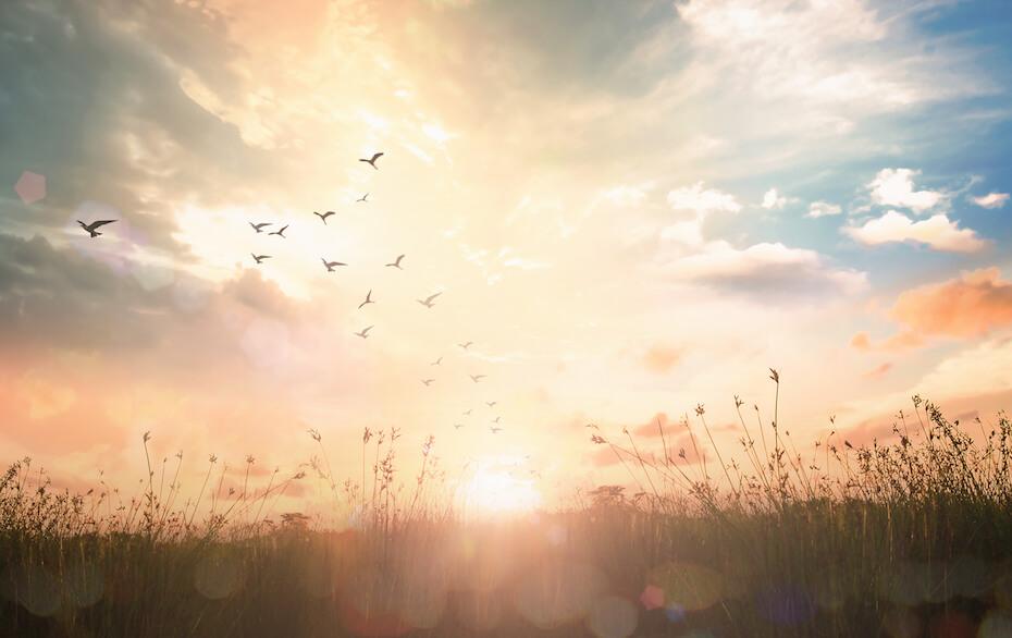 shutterstock-birds-flying-over-field-at-sunrise-021220