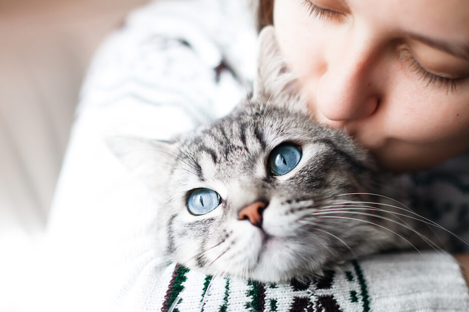 shutterstock-woman-hugging-and-kissing-grey-cat-021920