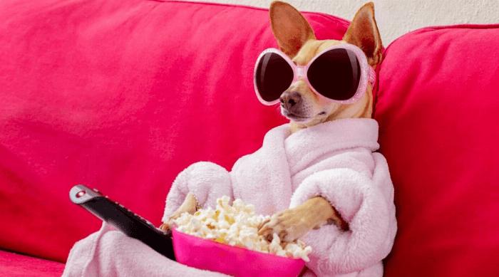 dog popcorn sunglasses