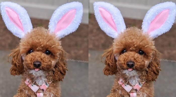 puppy wearing bunny ears