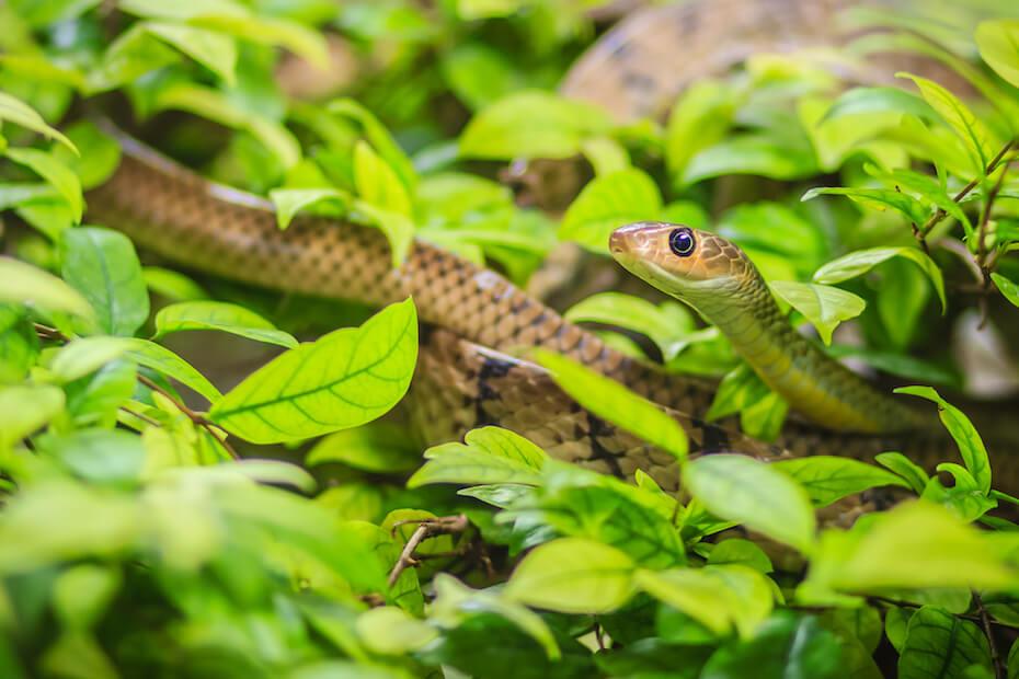 Shutterstock: Cute snake hiding in leaves