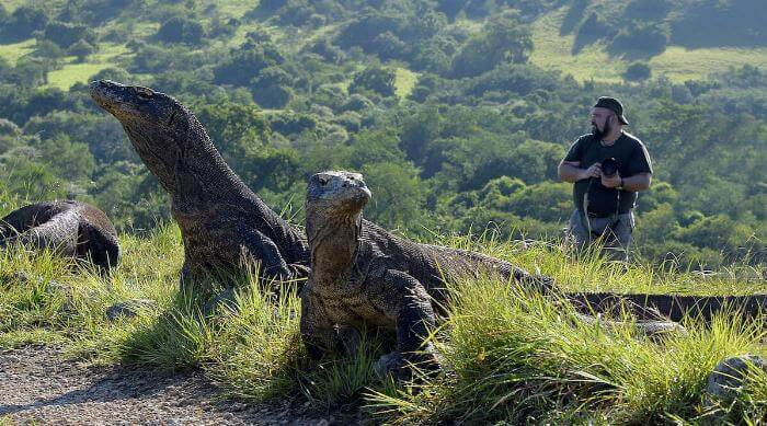 Shutterstock: Komodo dragons with photographer