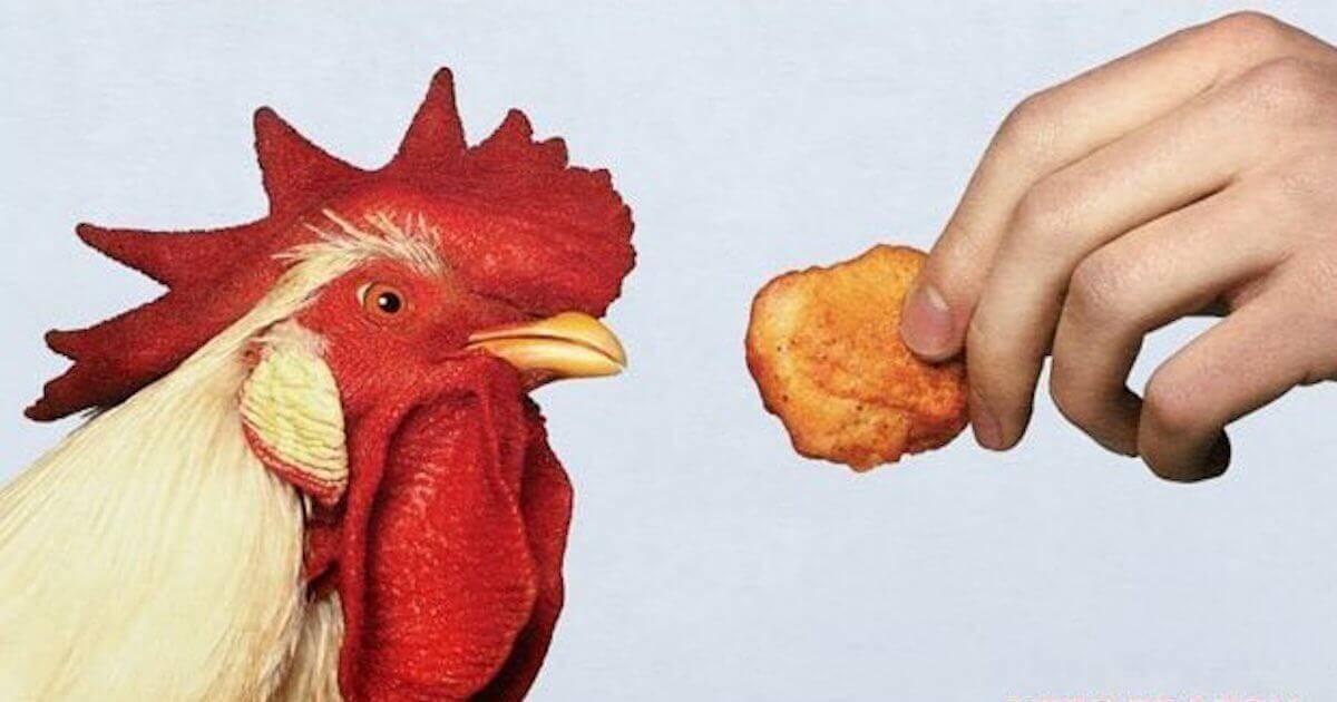 NUGGS Vegan U0026 39 Chicken U0026 39 Nuggets Are The Nugget Of The Future