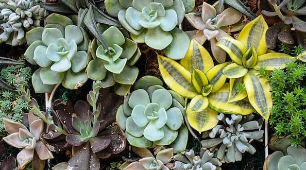 Shutterstock: succulent garden