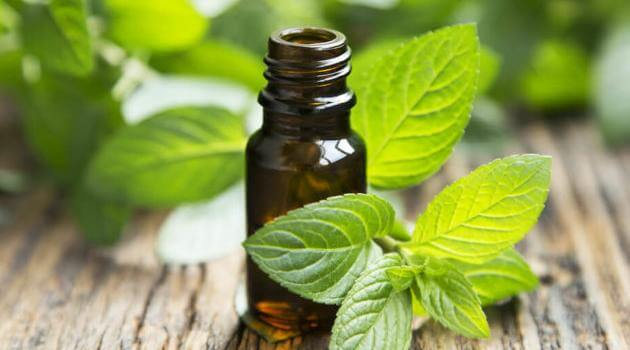 Shutterstock: peppermint essential oil