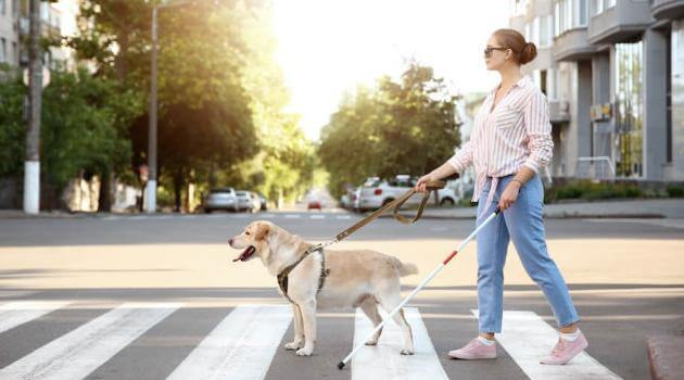 Shutterstock: woman walking across the street with a guide dog and a cane
