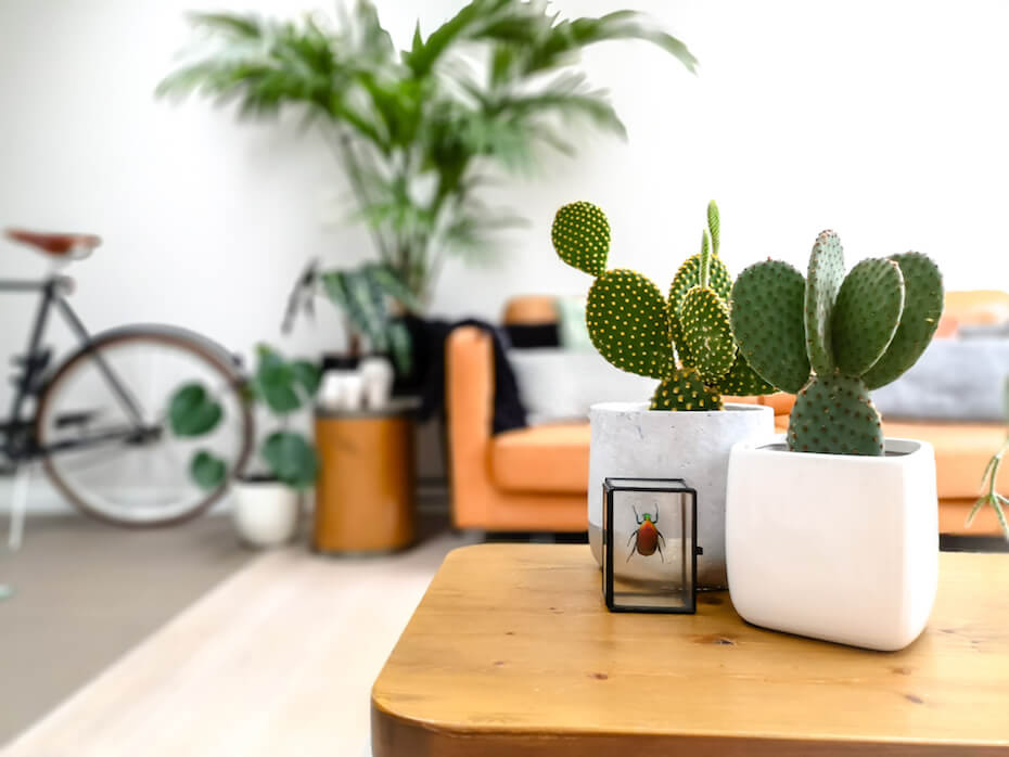 Shutterstock: Light modern living room with an urban jungle feeling thanks to numerous houseplants and a preserved colorful beetle