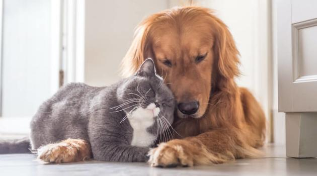 Shutterstock: cat and dog