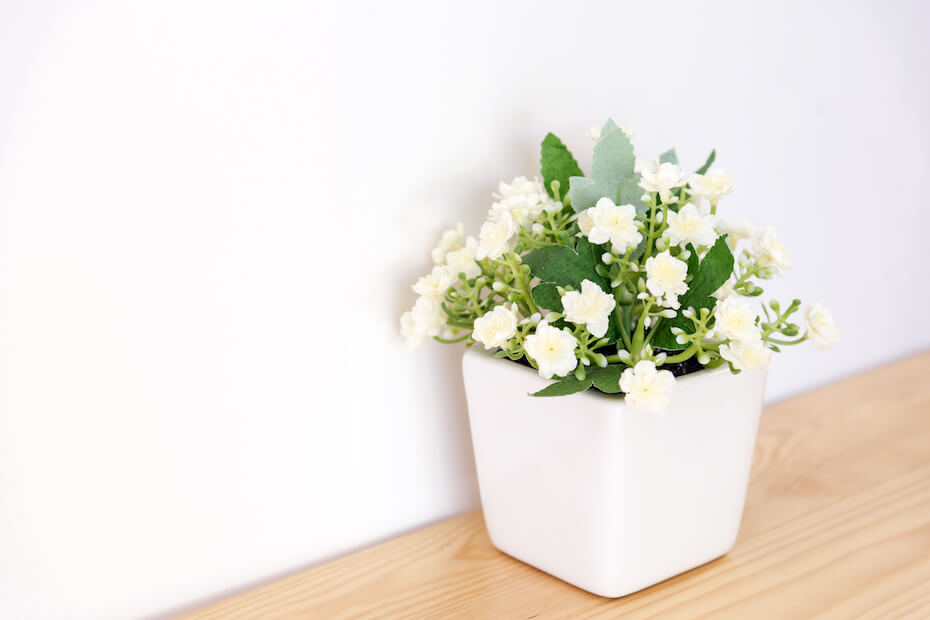 Shutterstock: the artificial jasmine flower in the pot at the wooden table with the white wall background