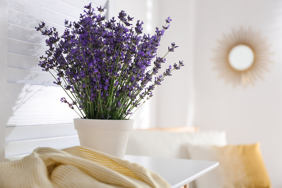 Shutterstock: Beautiful lavender flowers and yellow shirt on white table indoors. Space for text