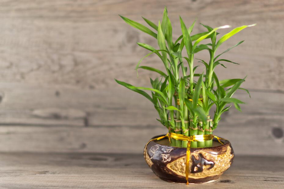 Shutterstock: Bamboo in vase
