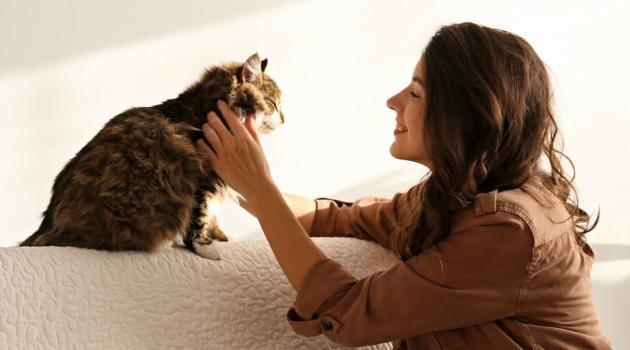 Shutterstock: woman petting cat