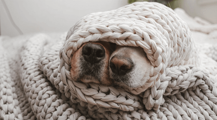 Bearaby dogs wrapped in blanket