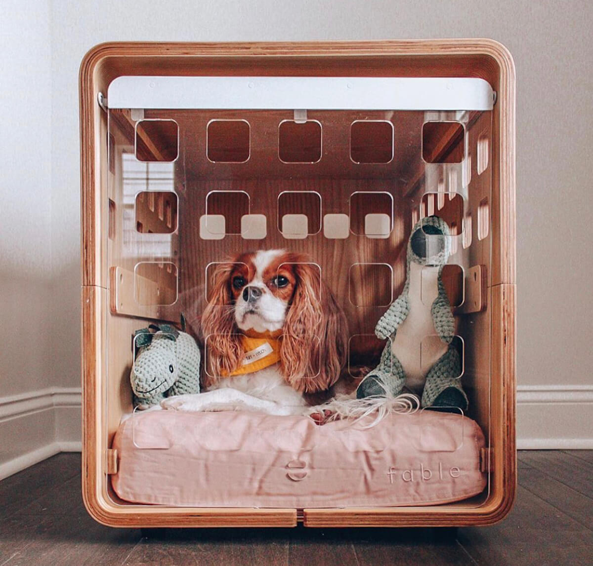 Cavalier King Charles Spaniel in Fable crate