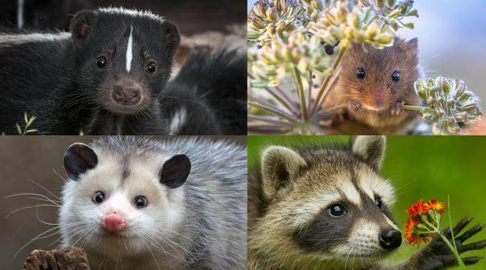 Cute rascal animals zodiac