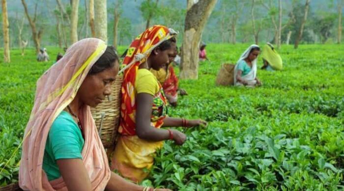 women gathering in field